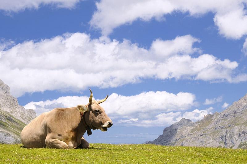 Carne de Tudanca: Sabor natural de Cantabria en La Renta